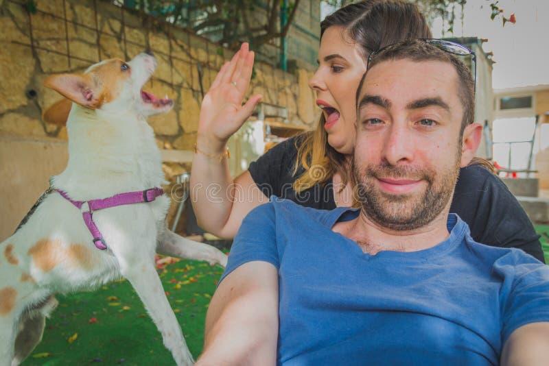 Шаловливые и excited сюрприз и прерывание собаки терьера Рассела jack к молодым парам которые пробуют быть сфотографированным стоковая фотография