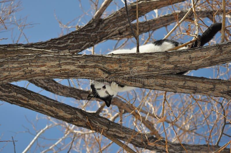 Шаловливый кот в дереве вербы стоковое фото rf