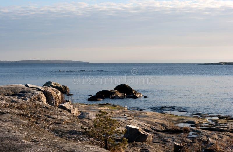 шведский язык архипелага стоковое изображение
