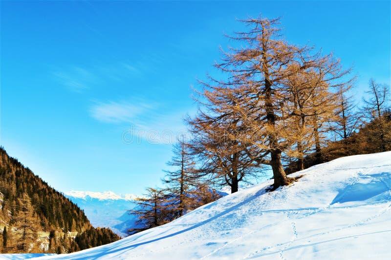 Швейцарец Альпы и ландшафт зимы стоковое изображение