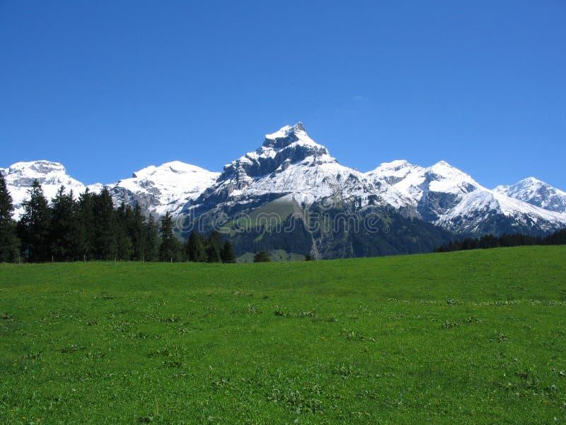 швейцарец горы травы поля стоковое изображение