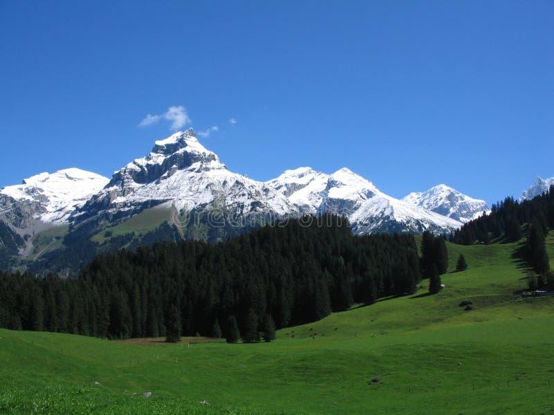 швейцарец ландшафта стоковые фото