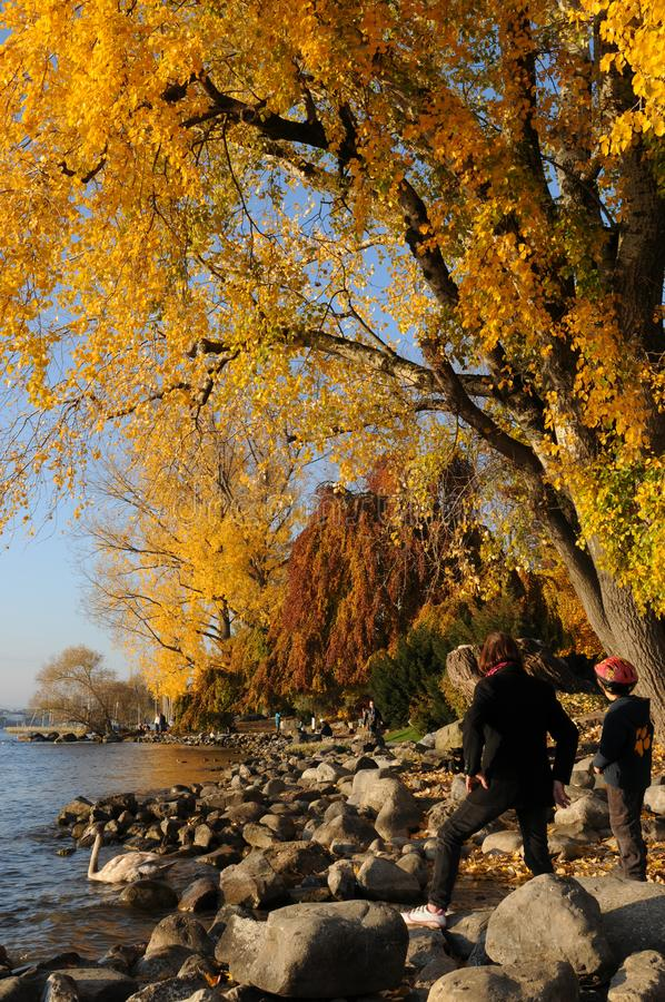 Швейцария: цвета осени на богачах ¼ озера ZÃ в Seefeld стоковое изображение rf