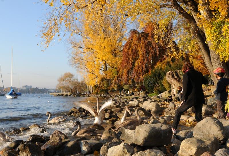 Швейцария: цвета осени на богачах ¼ озера ZÃ в Seefeld стоковое фото rf