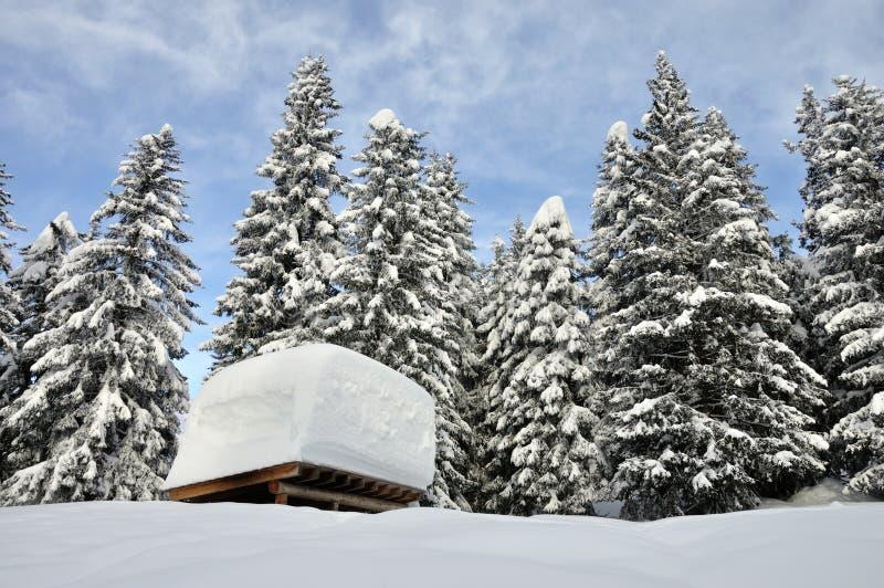 Швейцарская крыша горных вершин стоковое фото