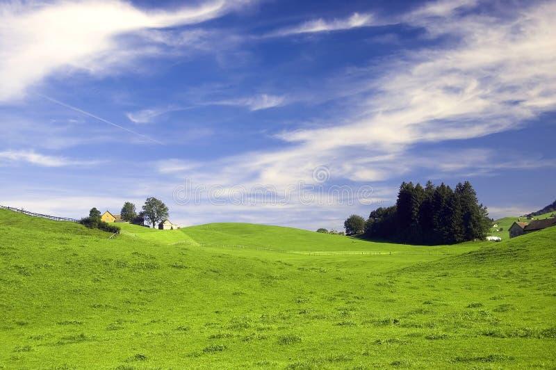 Швейцарский выгон в лете стоковое изображение rf
