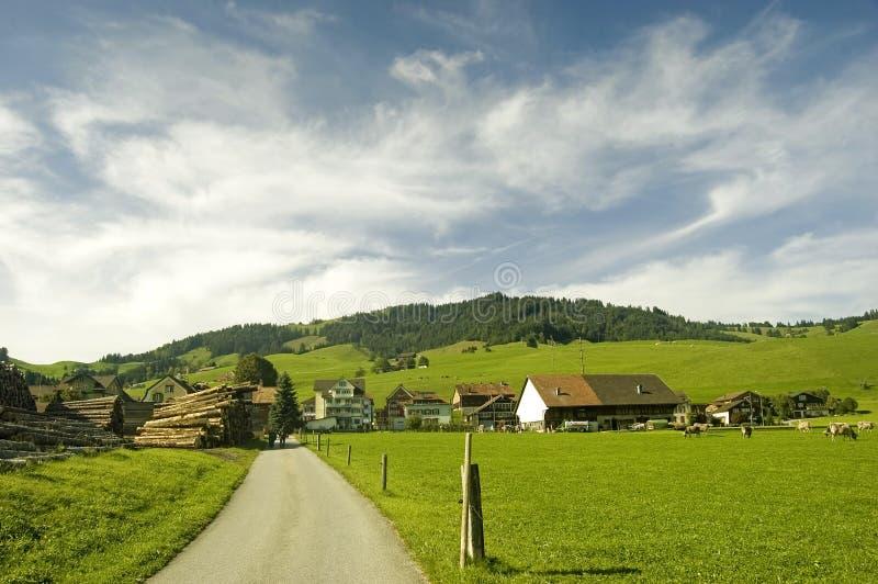 Швейцарский выгон в лете стоковая фотография rf