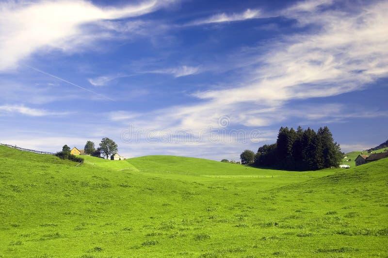 Швейцарский выгон в лете стоковое изображение