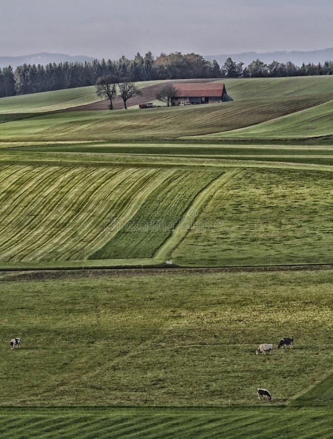 Швейцарцы благоустраивают с холмами стоковое фото rf