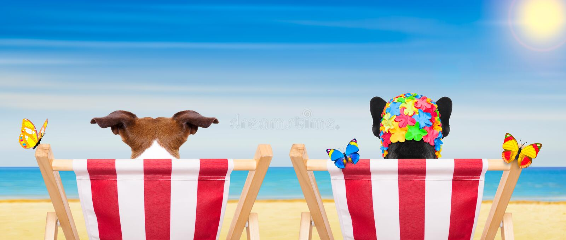 Шезлонг собаки в лете стоковое изображение rf