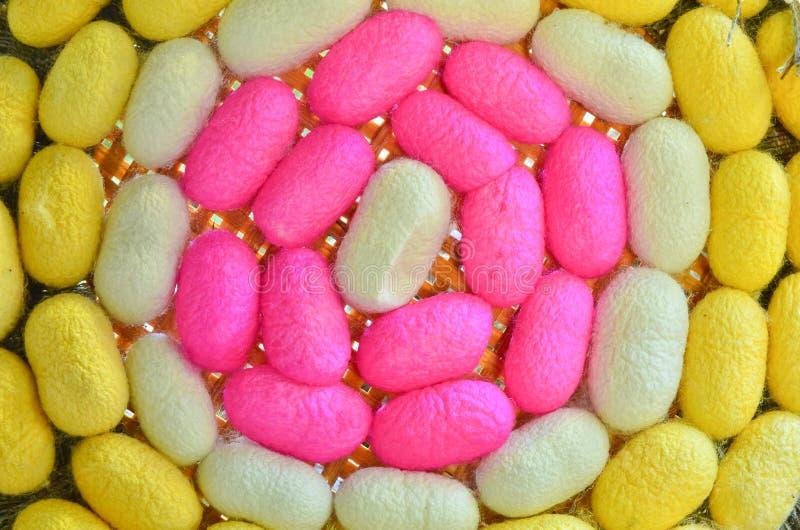 шелкопряд кокона цветастый стоковая фотография rf