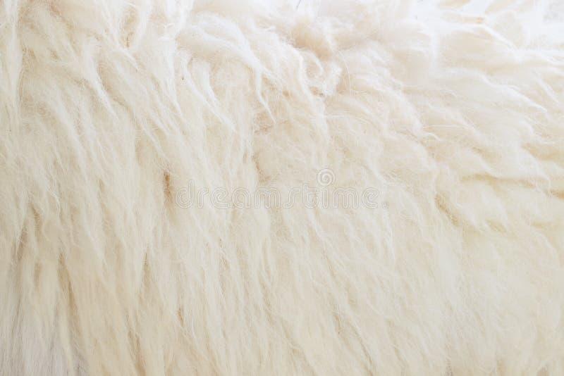 Шерсти овец стоковые фото