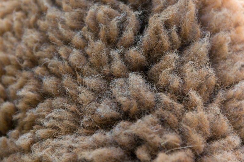 Шерсти овцы стоковые изображения rf