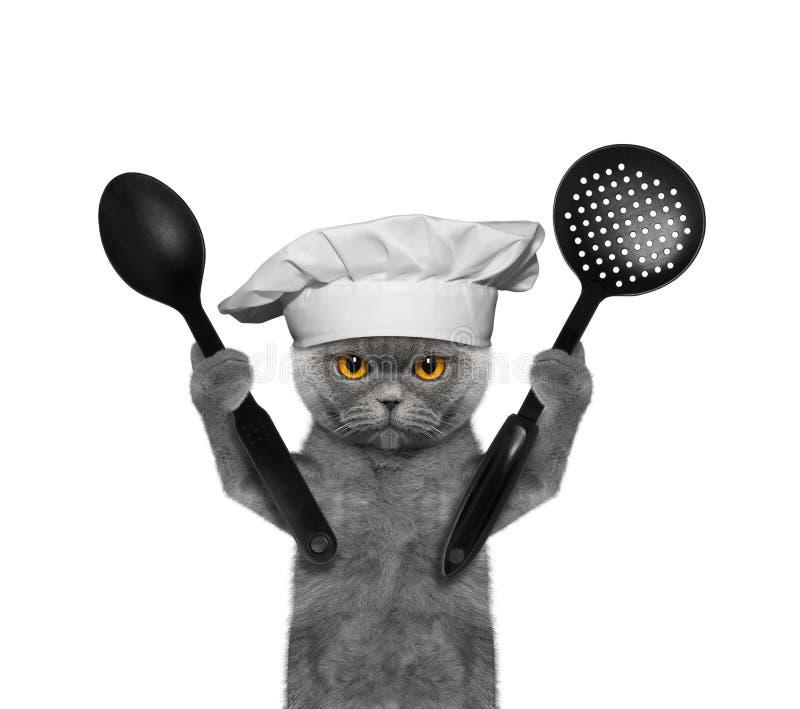 картинка котик повар качестве главного