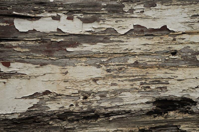 Шелушась краска 2 стоковое изображение rf