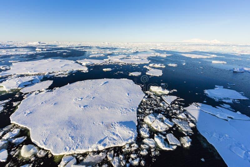 Шельфовые ледники в проливе Gerlache стоковое фото rf