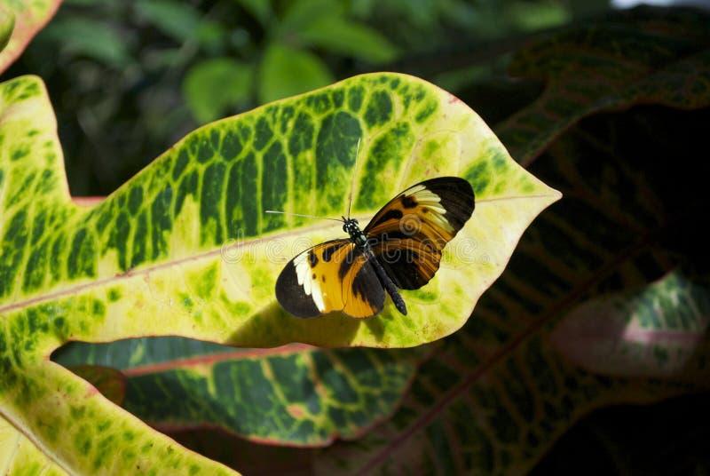 Шикарная бабочка стоковые изображения rf