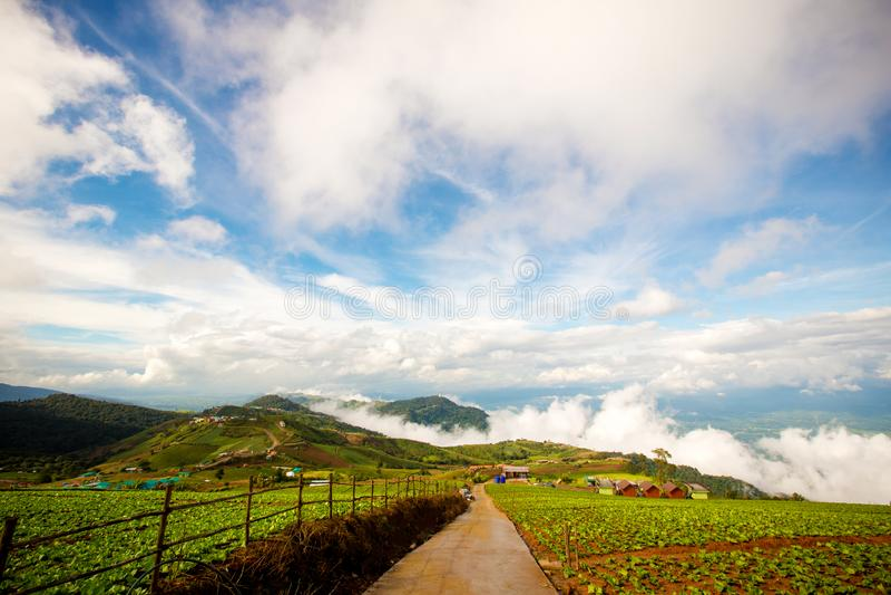 шикарный ландшафт голубого неба, белого облака и зеленого холма стоковое изображение rf
