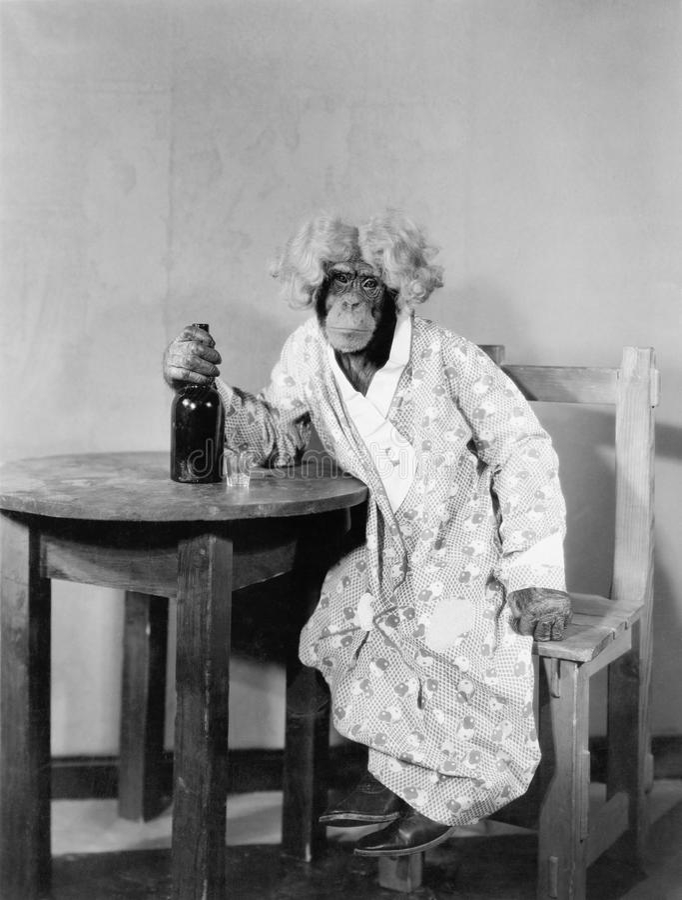 Шимпанзе одетый как женщина с бутылкой и стопка (все показанные люди более длинные живущие и никакое имущество не существует пост стоковое изображение