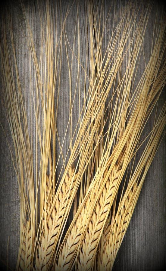 Шипы пшеницы стоковые изображения rf