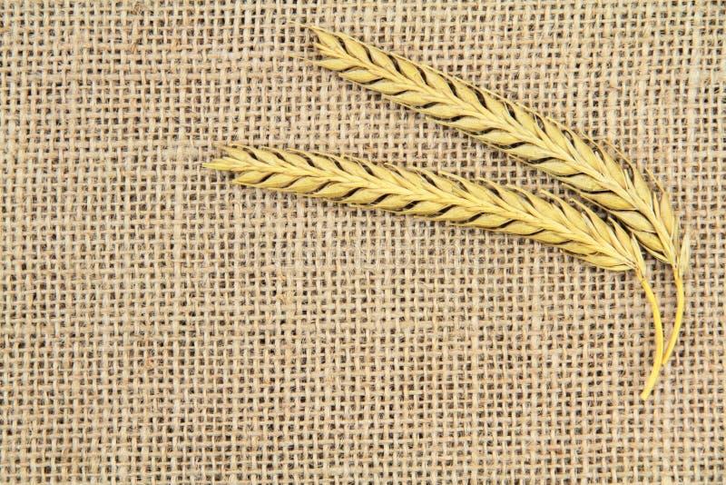 Шип пшеницы стоковое фото