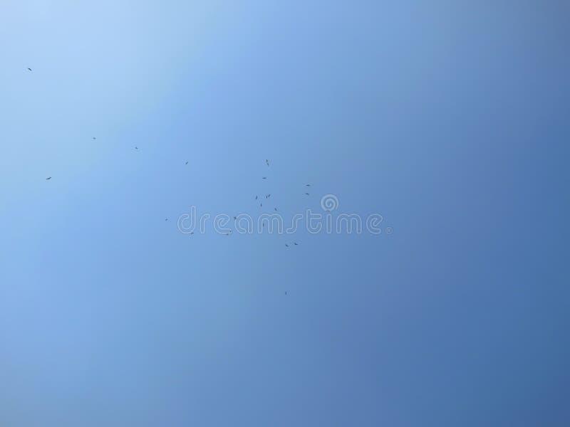 Широкое фото группы в составе орлы летая высоко в красивое темносинее небо на ясный солнечный день стоковая фотография
