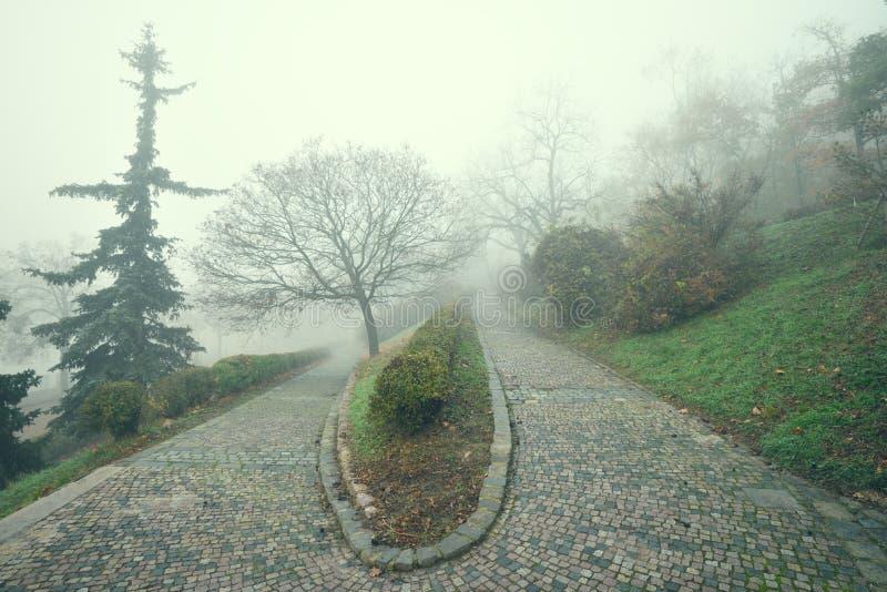 Широкоформатная тропа парка города в осени стоковые фотографии rf
