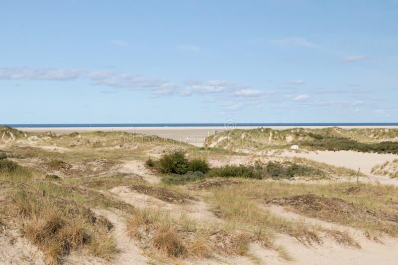 Широкоформатный взгляд на песчанной дюне borkum стоковое изображение