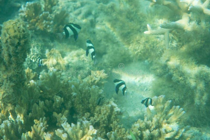 школа тропических рыб около поверхности воды в коралле стоковые изображения rf