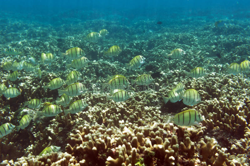 Школа желтых рыб стоковое фото