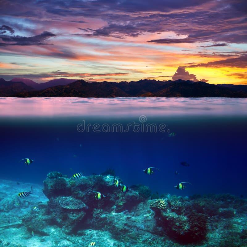 Школа рыб в тропическом океане на красивом splitte захода солнца стоковые фото