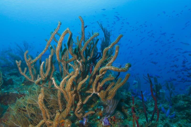 Школа рыб над тропическим коралловым рифом стоковое изображение rf