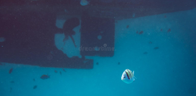 Школа рыб подводных над пропеллером и штурвалом шлюпки на большом сосуде стоковые изображения