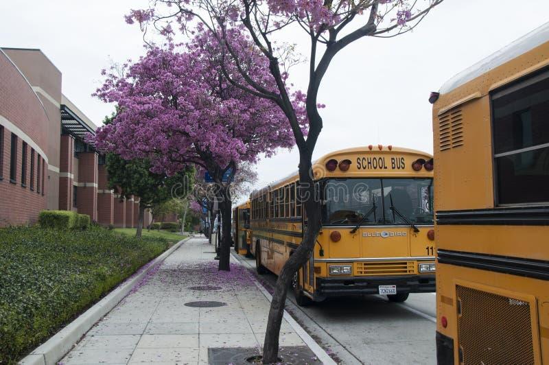 Школьные автобусы стоковые фотографии rf