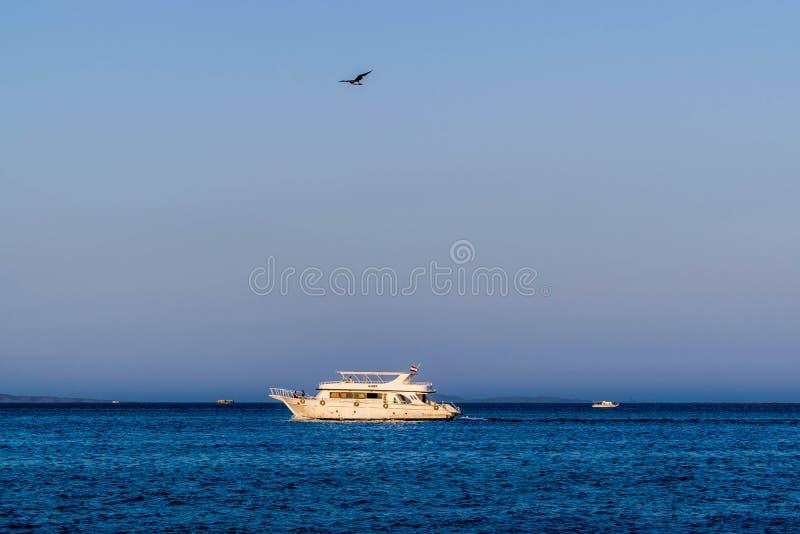 Шлюпка в Красном Море и летящей птице стоковые изображения