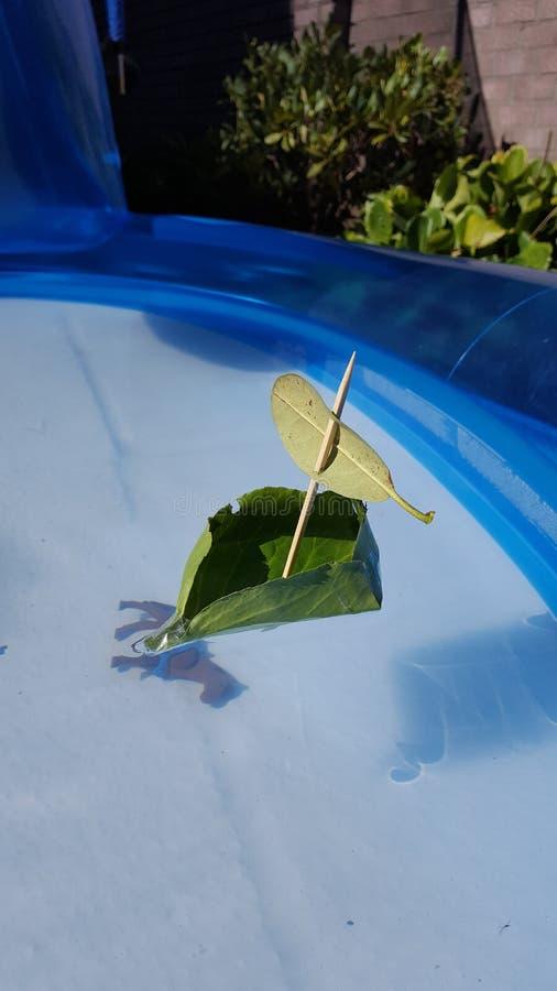 Шлюпка листьев в плавательном бассеине стоковое фото