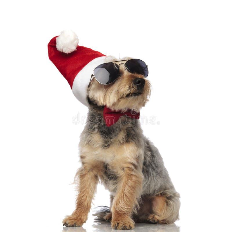 Шляпа, солнечные очки и бабочка Йоркшира Terrierwearing Санта Клауса стоковые изображения rf