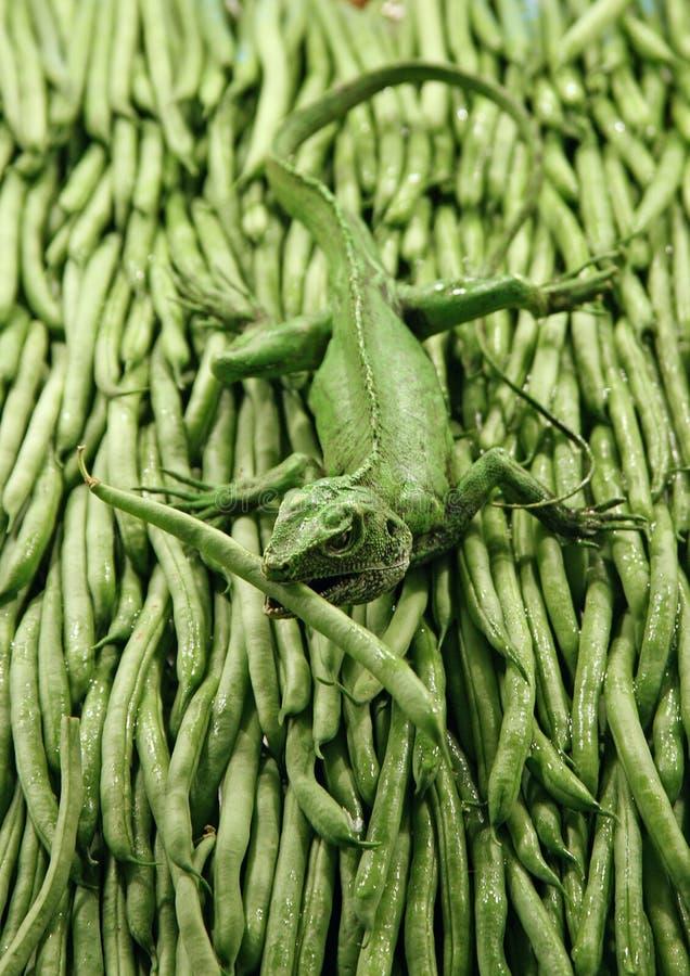 шнур gecko фасоли стоковая фотография