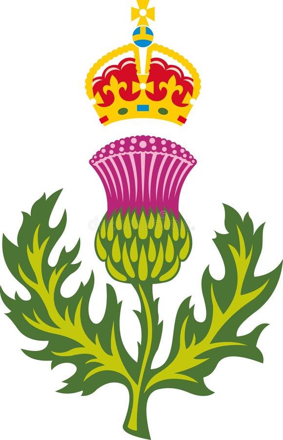 Шотландский thistle иллюстрация вектора