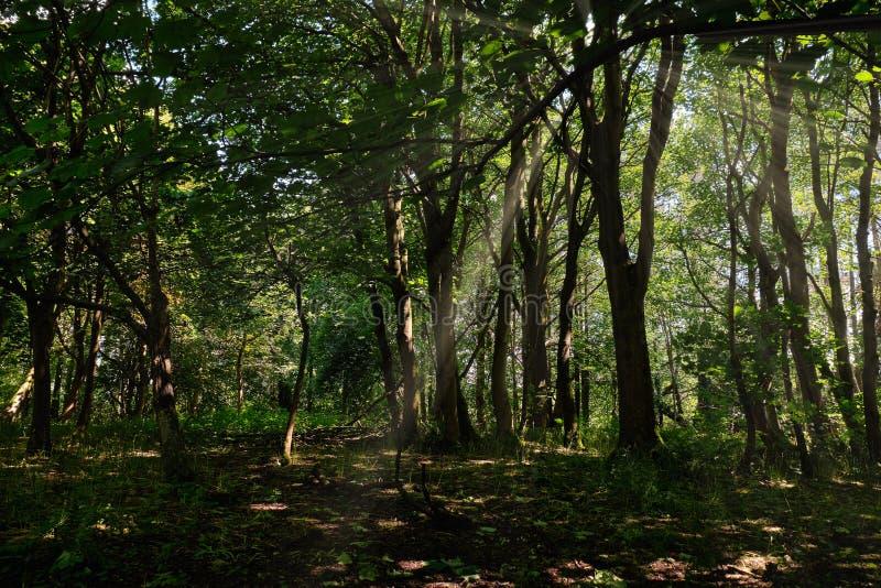 Шотландское Forrest идет летом в течении волшебного шотландского f стоковое изображение rf