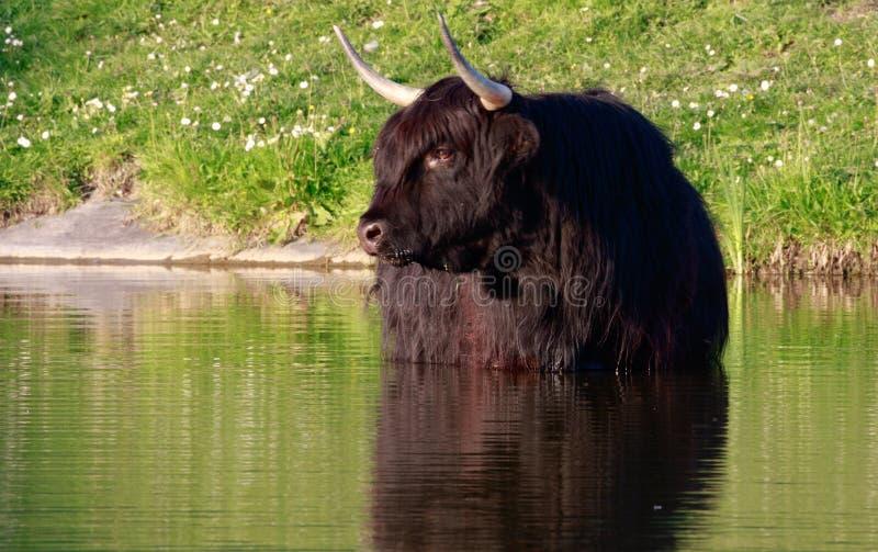 Шотландский горец стоковое фото rf