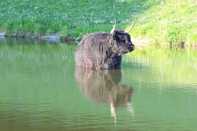 Шотландский горец стоковое изображение