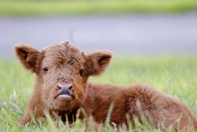 Шотландский младенец горца стоковое фото