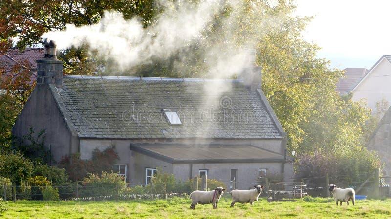 Шотландский дом фермы стоковые изображения rf