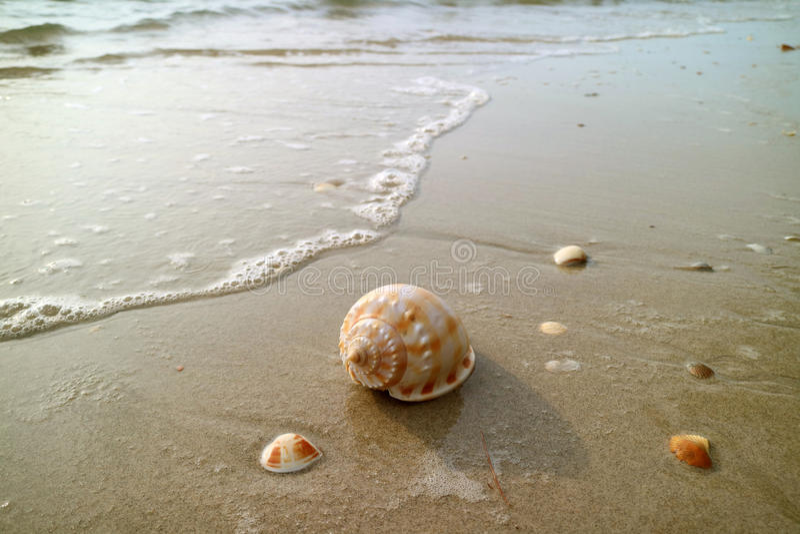 Шотландский Seashell Bonnet с другими малыми seashells на пляже причаливая волной клокочет стоковое фото
