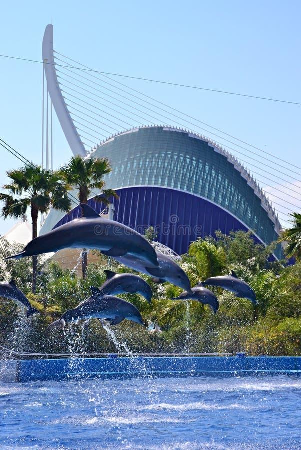Шоу Dolphine в центре океана Валенсия, Испании стоковое фото