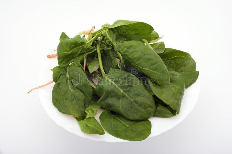 Download шпинат стоковое фото. изображение насчитывающей свеже, овощ - 491664