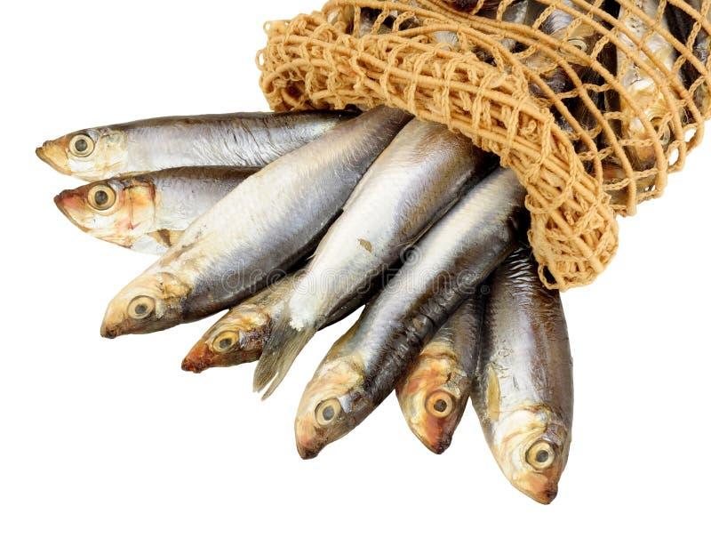 Шпротины и сеть свежих рыб стоковая фотография
