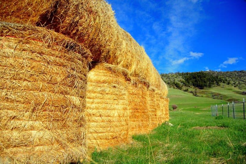 штабелированное сено bales стоковая фотография rf