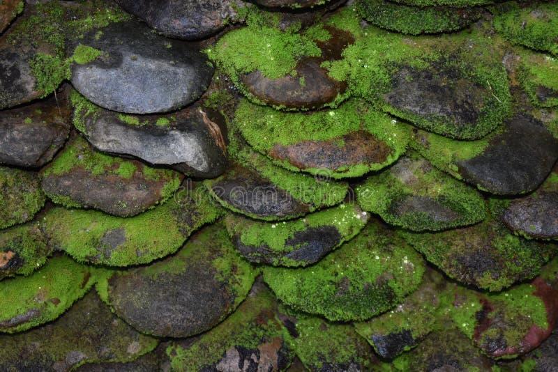 Штабелированные мшистые камешки стоковое фото rf